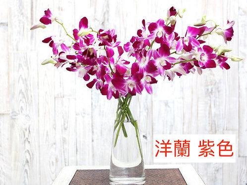洋蘭 紫色 產地昆明 8枝送2枝共10枝