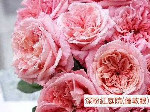 玫瑰 深粉紅庭院 倫敦眼 產地昆明 18枝送2枝共20枝