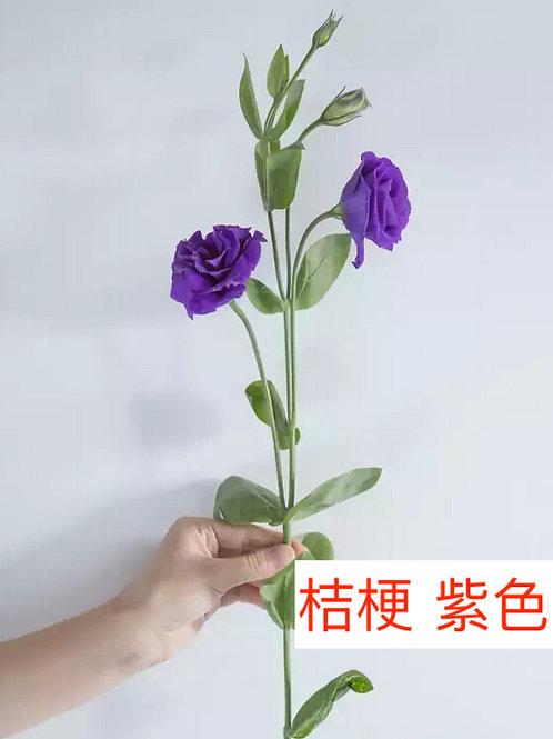 桔梗 紫色 產地昆明 8枝送2枝共10枝