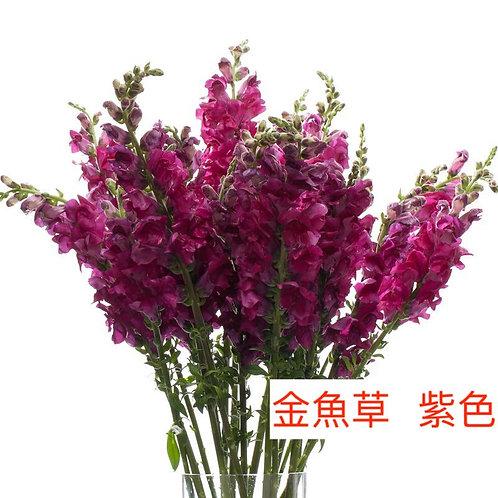 金魚草 紫色 產地昆明 8枝送2枝