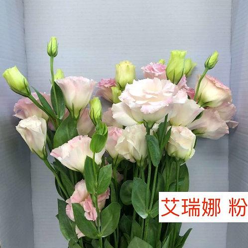 桔梗 艾瑞娜 粉 產地台灣 8枝送2枝共10枝