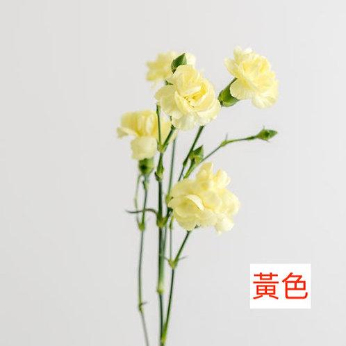 多頭康乃馨 (小丁)黃色 產地昆明 18枝送2枝共20枝