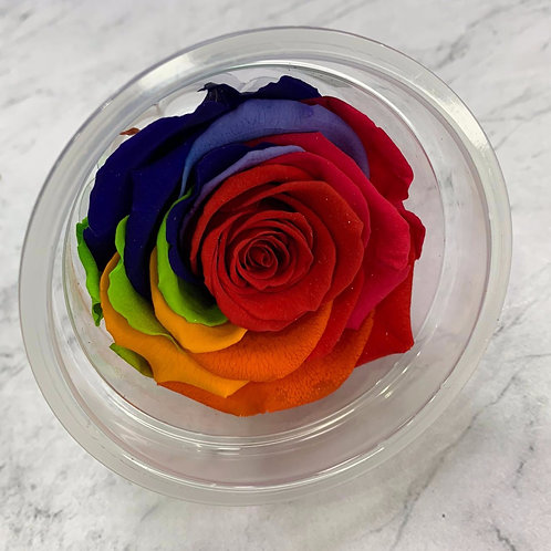 特級保鮮花玫瑰 (6-7cm直徑)