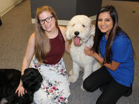 Therapy Dogs with Staff