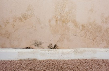 External mold caused by water leak. Mold growth is usually less obvious.