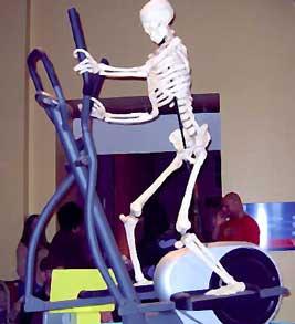 Skeleton Using an Elliptical Machine to Get a Stronger Sense of Balance