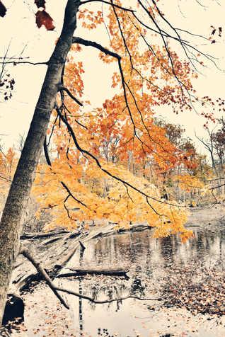 autumn notes