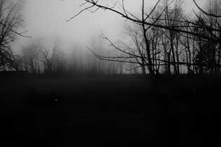 whisper of woods