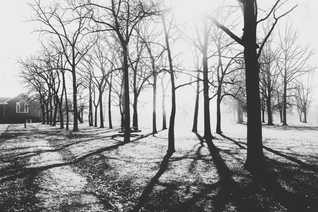 dancing woods
