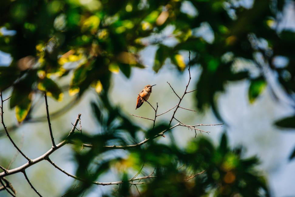 222-photography-by-lana-tavares-destinat