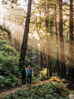Big Sur Redwoods Adventure Engagement by Lana Tavares