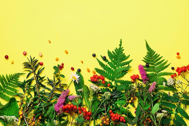 Ingredients of herbal alternative medici