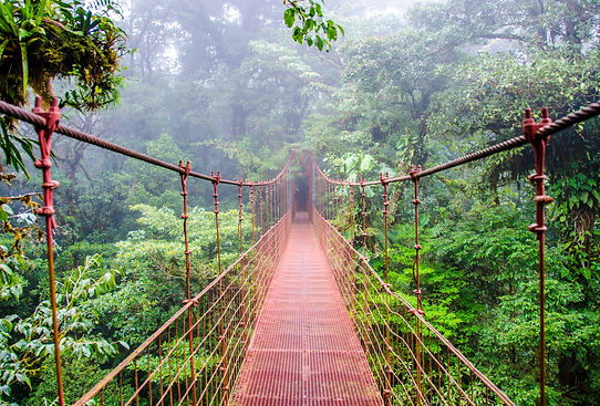 Bridge%20in%20Rainforest%20-%20Costa%20R