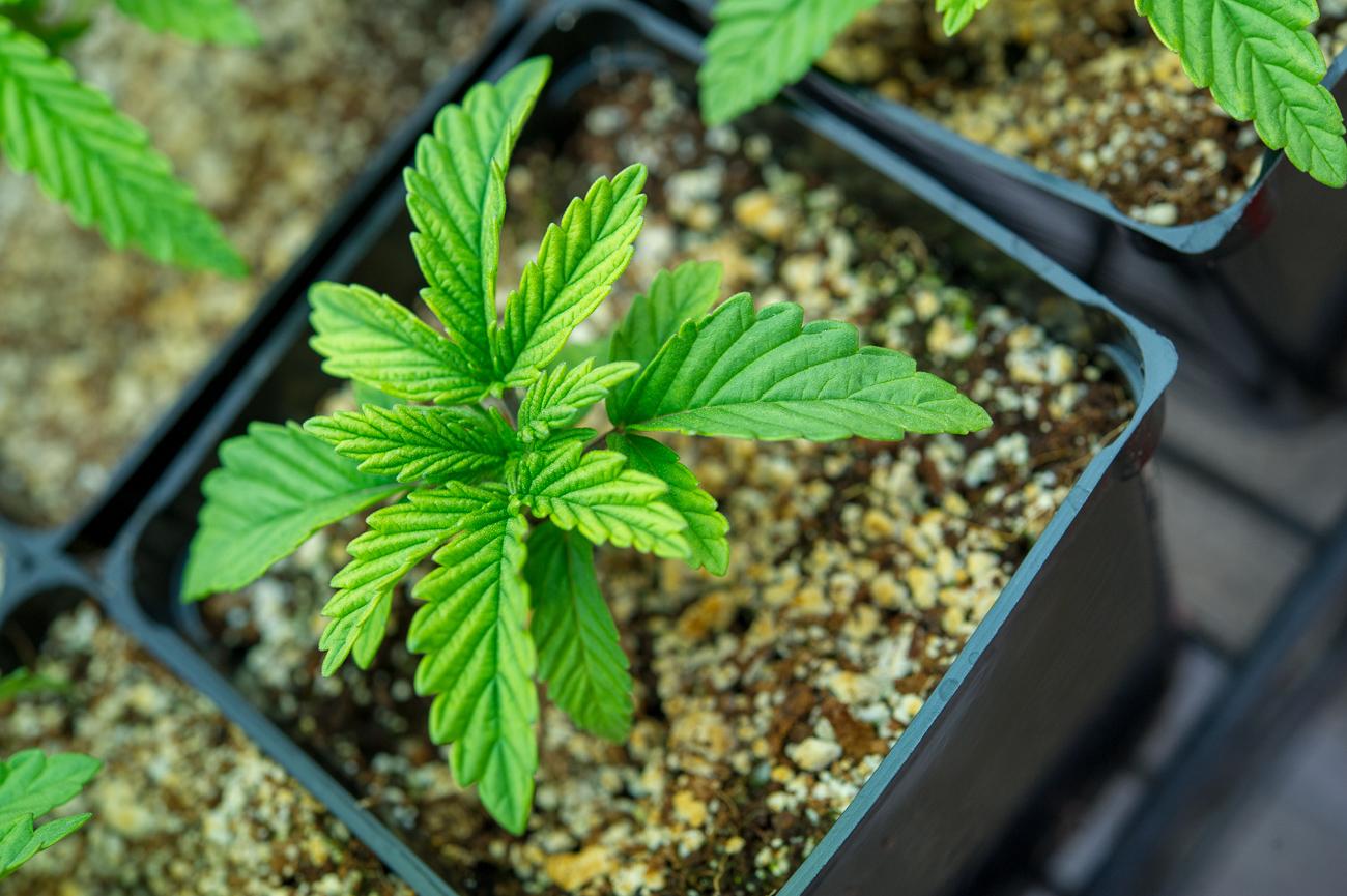OregonsOwn-Seedlings-6_20180403-77