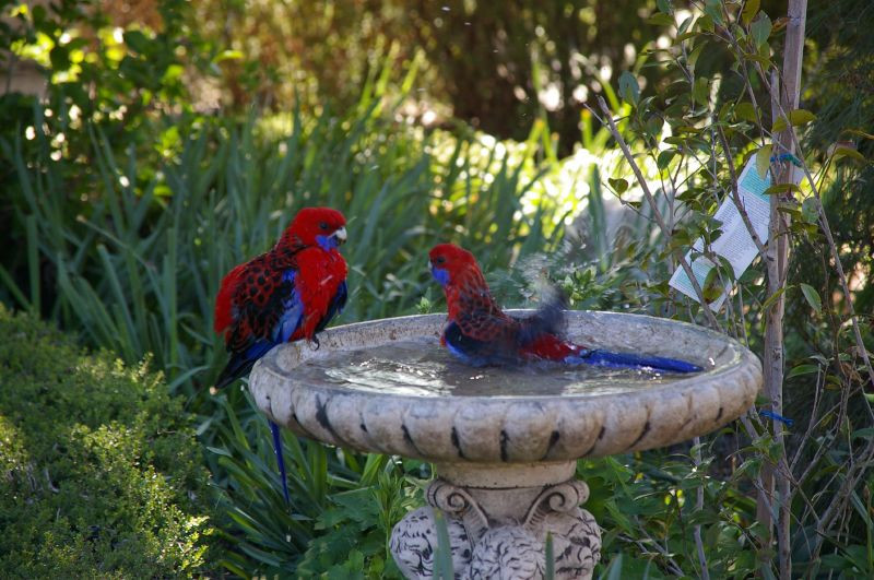 Your garden can use many purposes including being animal friendly
