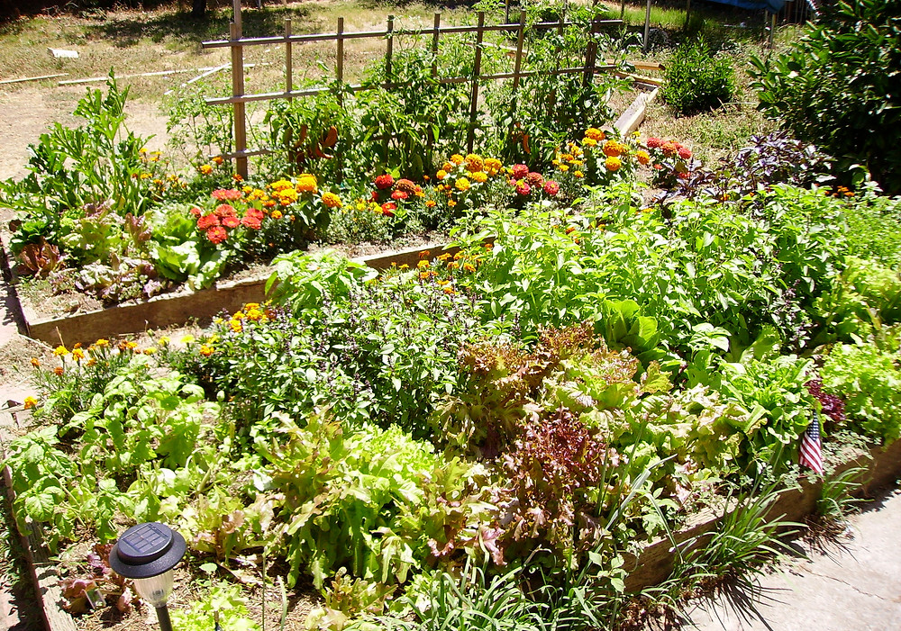 Raised beds are great to the beginner gardener