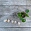 Thumbnail: Chinese Money Plant (Pilea Peperomiodes)