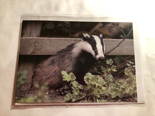 Greeting Card - Badger Photo (14)