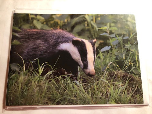 Greeting Card - Badger Photo (15)