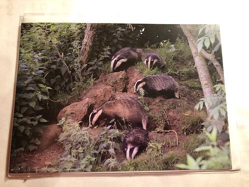 Greeting Card - Badger Photo (16)