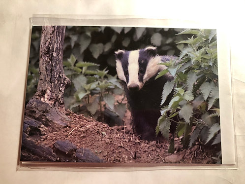 Greeting Card - Badger Photo (13)