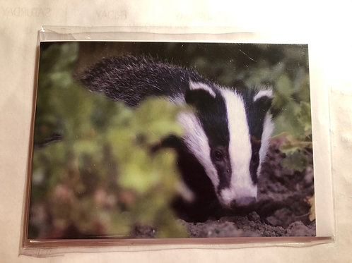 Greeting Card - Badger Photo (10)
