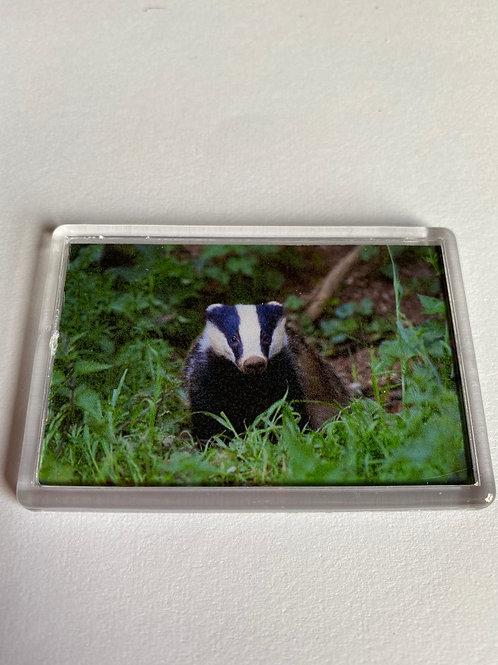 Badger Magnet (9)