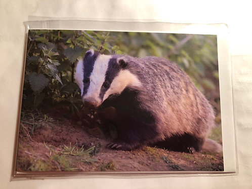 Greeting Card - Badger Photo