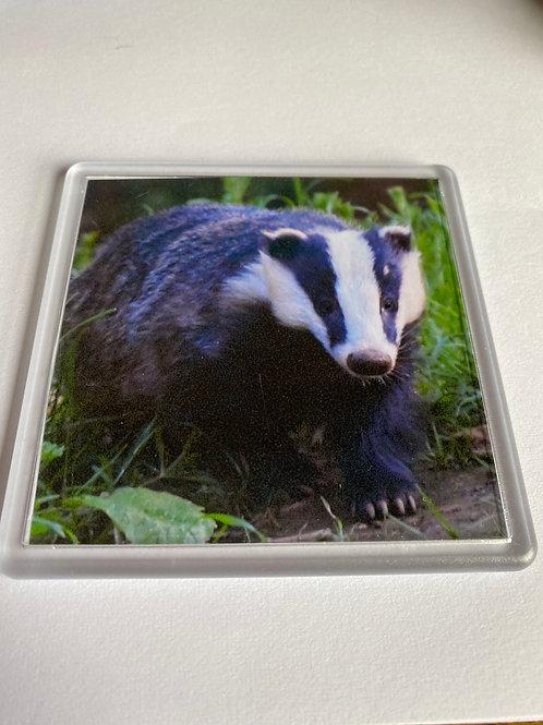 Coaster - Badger Photo