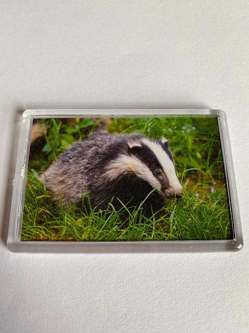 Badger Magnet (11)