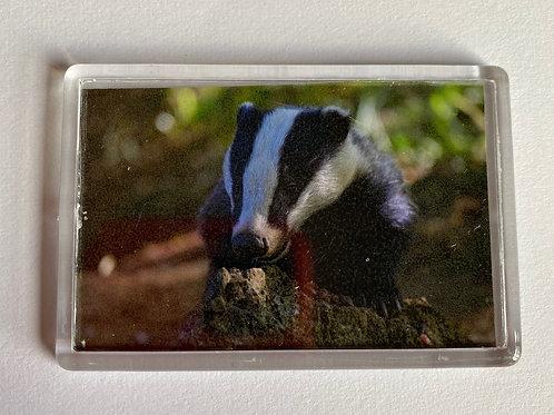 Badger Magnet (3)