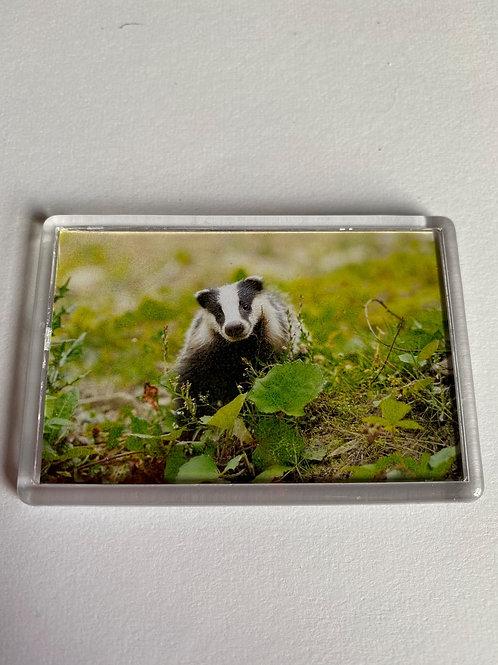Badger Magnet (10)