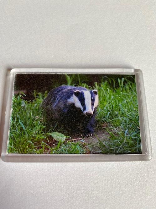 Badger Magnet (12)