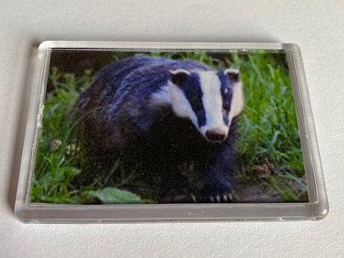 Badger Magnet (5)