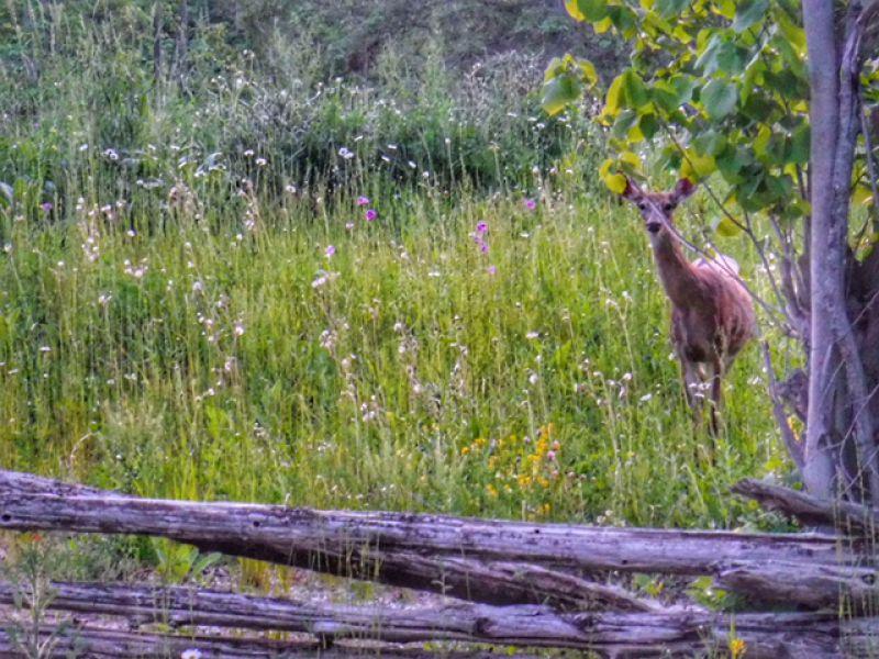 Curious neighbour