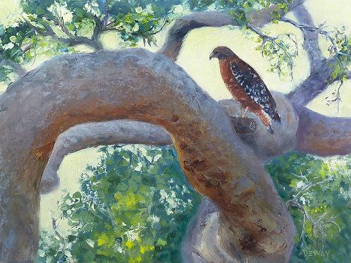 """""""Hawkeye"""" oil painting"""