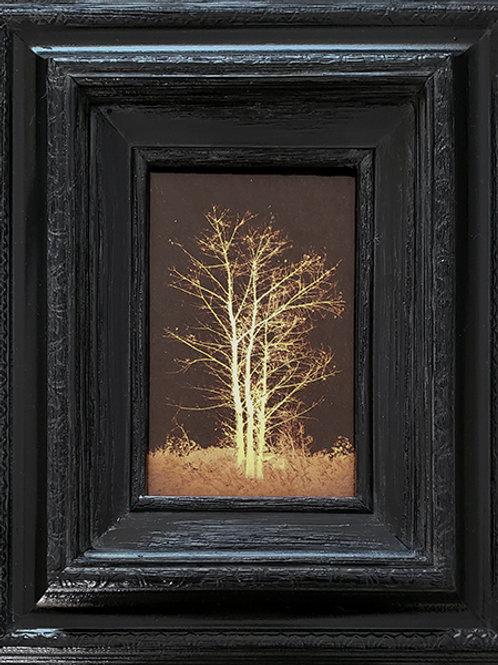 Gilded Light- Trees at Night