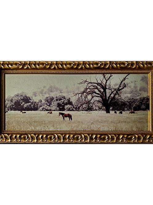Gilded Light- Field of Horses