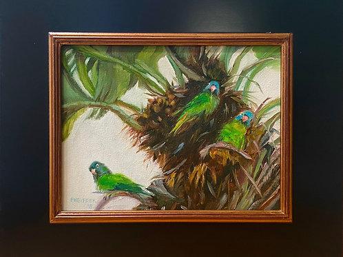 The Wild Parrots of Oceanside