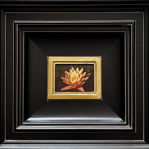 Gilded Light - Lotus