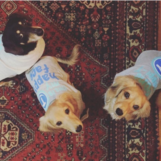 3 happy Daschunds in bonhappi-Ts feeding homeless dogs for a month