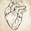 Thumbnail: Anatomical Heart