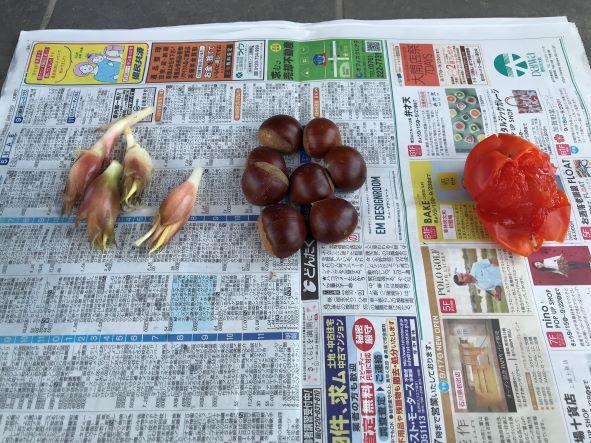 ミョウガと栗とやわらかい柿