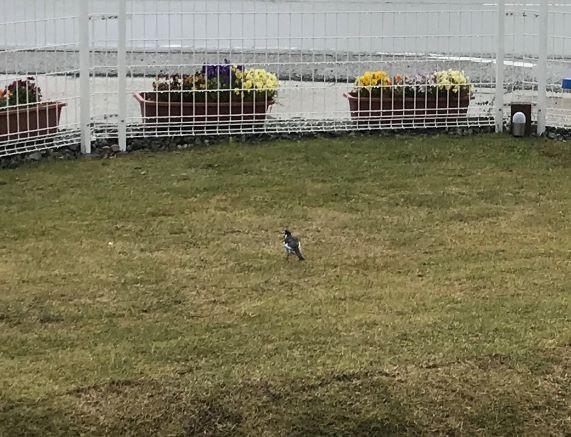 ドッグランに鳥さんが遊びに来ました。