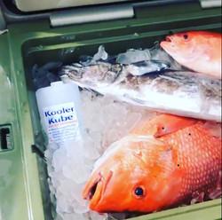fishbox2 (1)
