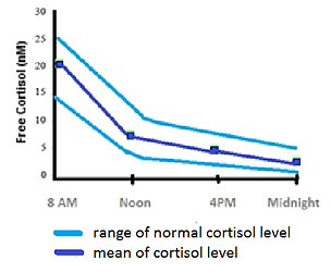Changes of cortisol level during the day