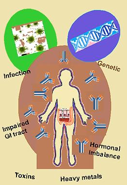 Autoimmunity factors.png