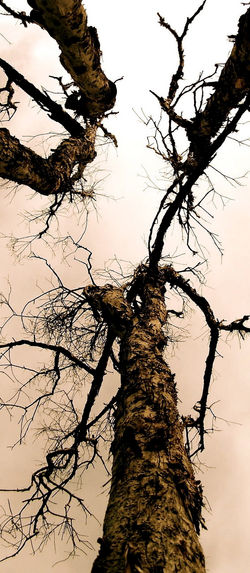 wooden dendrites 1
