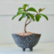 Leisa Russell_One Rock Bonsai_Bonsai Gro