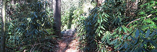 2009 Rec Park Trail.jpg